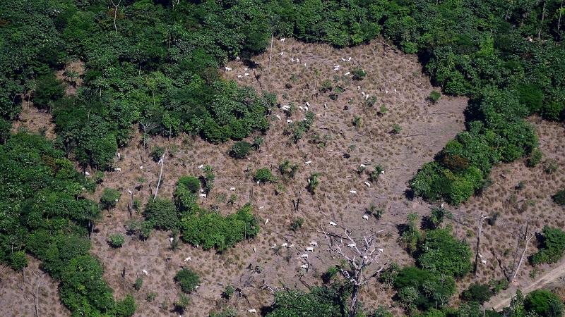 Entenda o atual cenário da política ambiental no Brasil